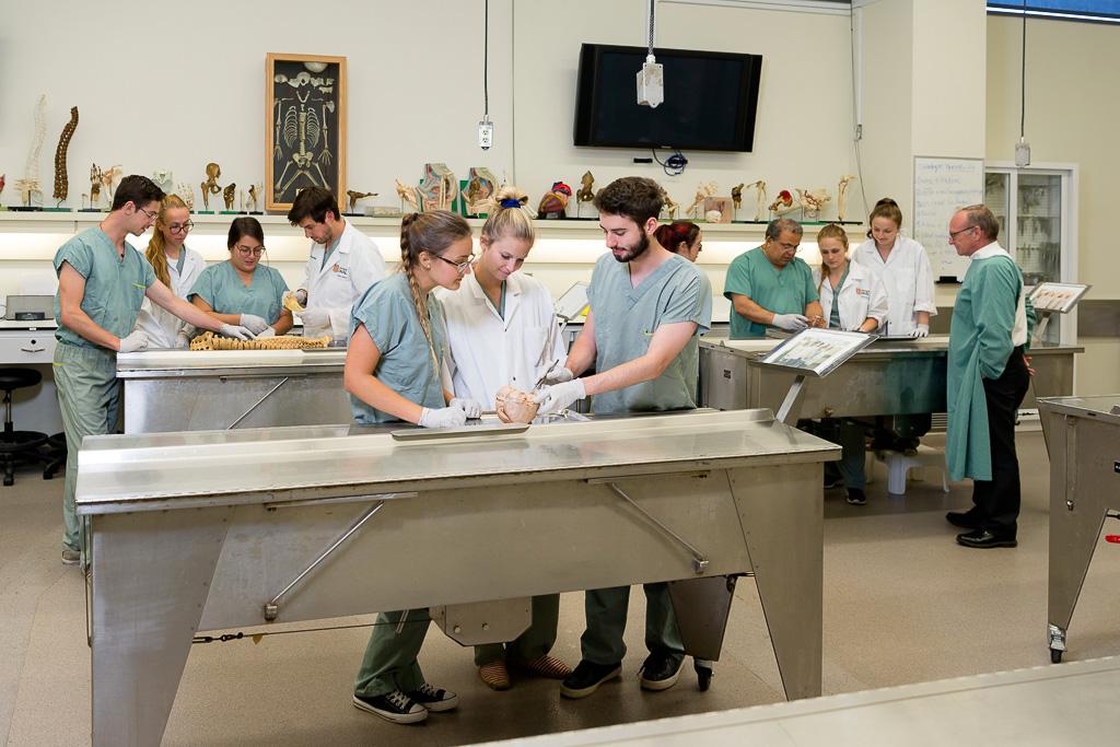 Cours d'anatomie dans le laboratoire
