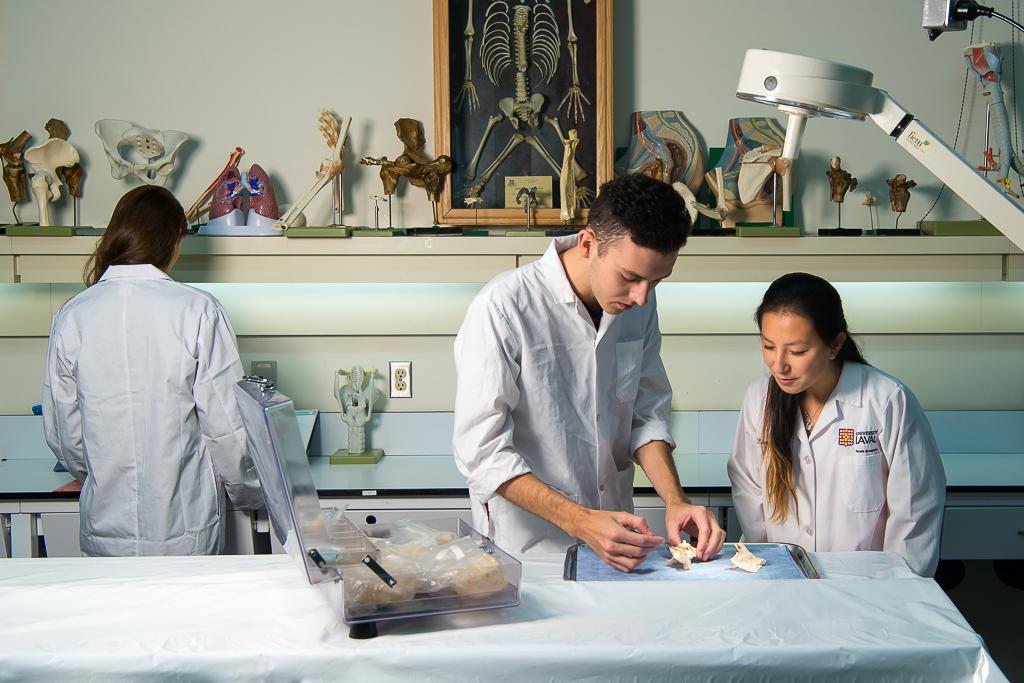 Étudiants manipulant des os dans le laboratoire d'anatomie