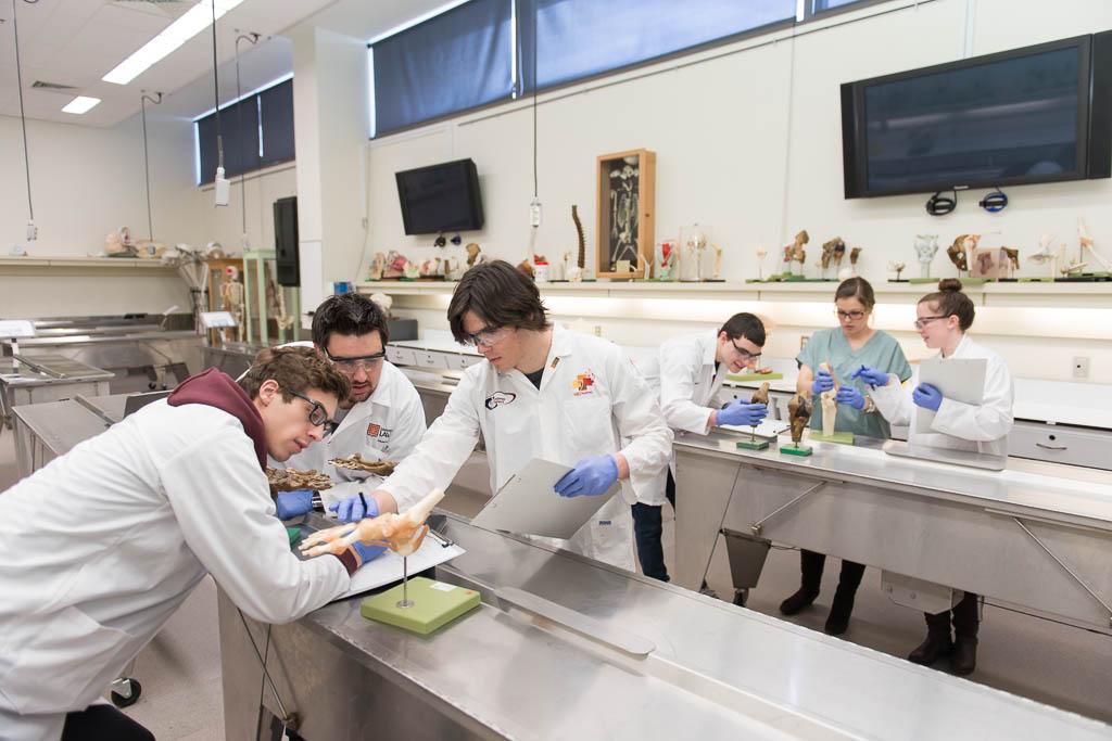 Laboratoire d'anatomie de la Faculté de médecine UL