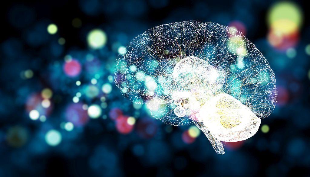cerveau en lumière