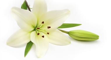 Fleur décès