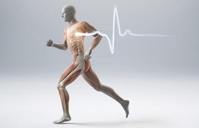 Santé cardiovasculaire, respiratoire et métabolisme